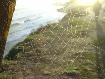 Spider web over ocean photo by Elizabeth Good