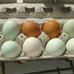 Natural eggs from local chickens