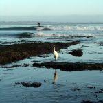 Surfer and Egret
