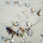 Rocks, Seaweed at Beach
