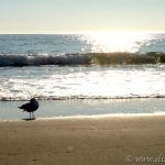 Bird, Wave