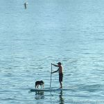 Stand-Up Surfing With Man's Best Friend