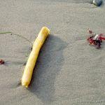 Kelp on Beach