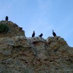 Birds, Pleasure Point Beach, Santa Cruz