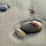 Beach Rocks. Seaweed