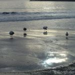 Birds and Sun Reflected
