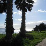 Palm Trees, Santa Cruz