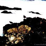 Colorized Rendering; Birds Pacific Grove Ocean