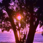 Colorized Tree at Sunset Aptos Beach