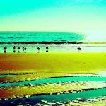 Colorized Rendering: Birds on Beach, Aptos California