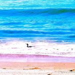 Colorized Rendering; Shorebird