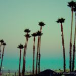 Colorized Rendering; Palm Trees