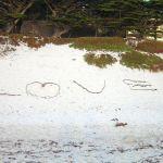 Seaweed Love Found at Carmel Beach, California